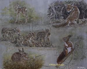 Jonge bos- en velddieren