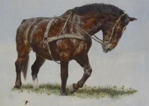 Ynusa Groninger paard