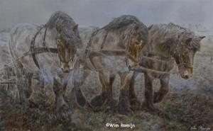 Trekpaarden bewerken land