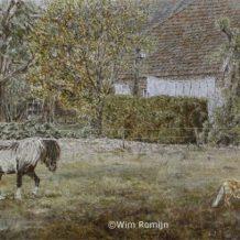 Shetlanderhengst en jonge vos