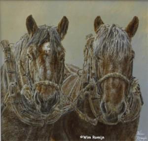 De laatste boerenpaarden van Voorne