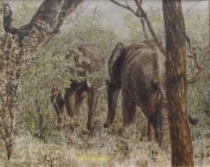 Afrikaanse olifanten in Kruger Park, Zuid-Afrika