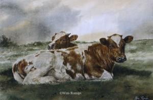 Roodbonte koeien op uiterwaard