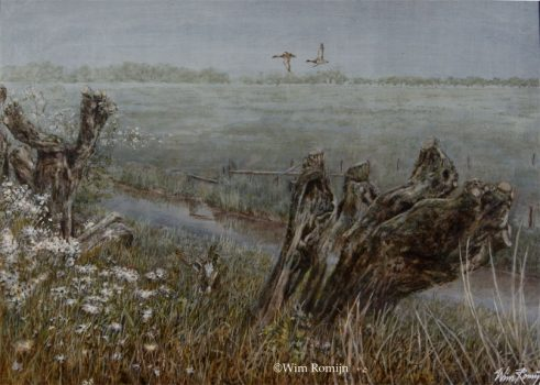 Wilde eenden boven een polderlandschap