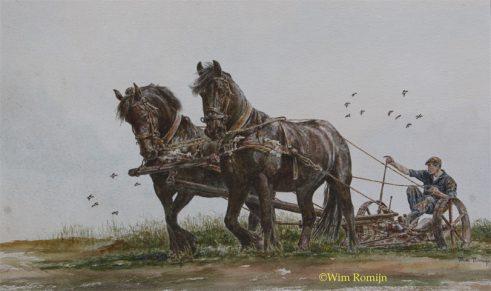 Friese paarden voor de maaimachine