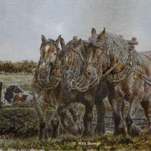 Trekpaarden voor de ploeg