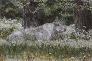 Piemantese stier onder boom in schaduw