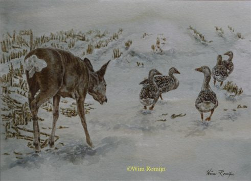Reegeit te midden van grauwe ganzen