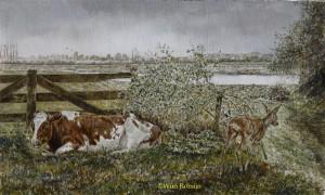 Roodbonte koe en reegeit