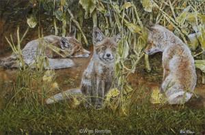 Jonge vossen in koolzaadveld
