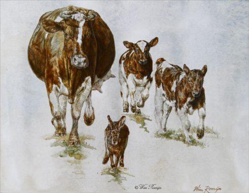 Roodbonte Friese koeien