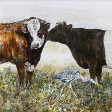 Stier-koe-reiger