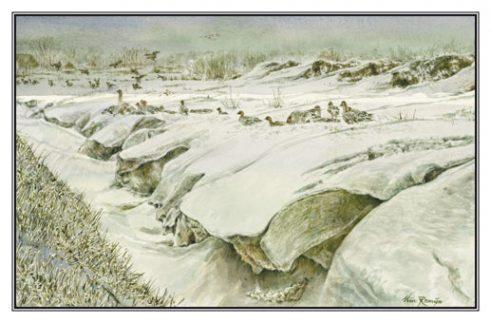 Kerstkaart Wilde ganzen bij sloot/opstuwende sneeuw