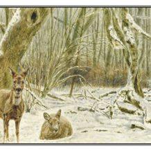 Kerstkaart Twee reegeiten (staand/liggend) in bos