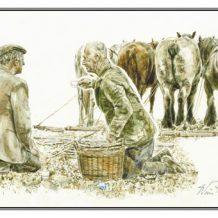 Wenskaart Boeren achter paarden