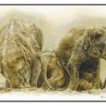 Wenskaart Drie olifanten