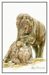 Wenskaart Twee olifanten