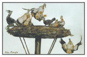 Verhuisbericht Nijlganzen en aalscholvers op nest