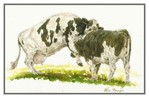 Valentijnsdag, wenskaart met twee koeien