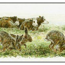 Valentijnsdag (wenskaart) Hazen en koeien