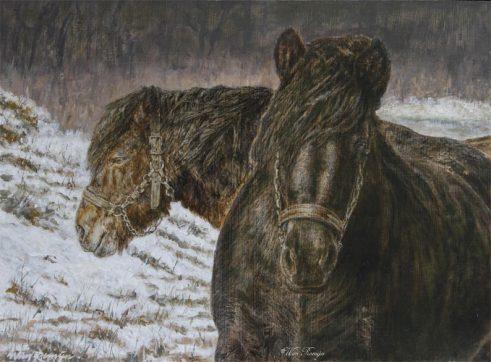 Twee massaal gebouwde trekpaarden in natuurgebied