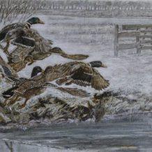 Wilde eenden in een mistig winterlandschap