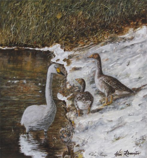 Wilde zwaan en grauwe ganzen a/d rand van een meer
