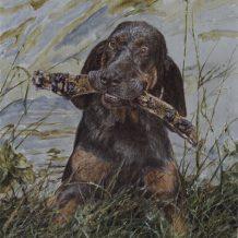 Bloedhond/Foxhound