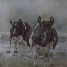Fries-Hollandse koeien