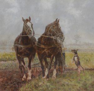 Twee Groninger paarden