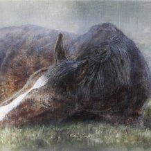 Groninger paard