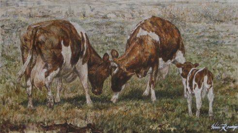 Fries Roodbont koeien